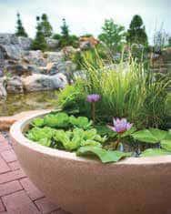 basin-container-garden
