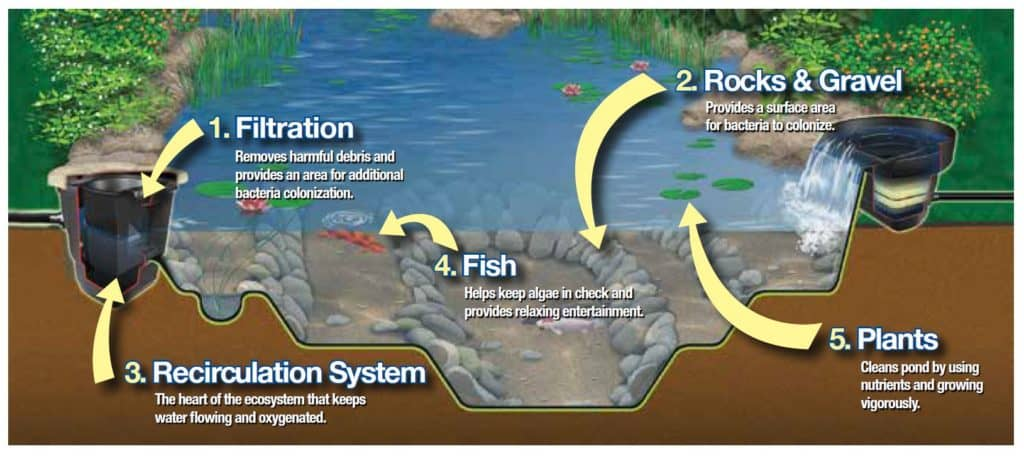 eco-pond-system-graphic