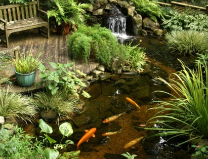 koi-fish-pond-waterfall
