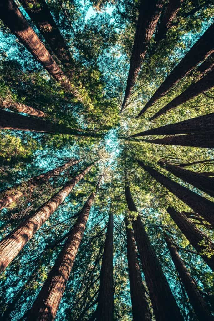 green space trees for forest bathing
